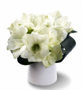 Frosty Amaryllis Clear glass cylinder vase in Fairfield, CT | Blossoms at Dailey's Flower Shop