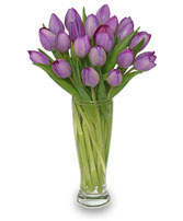 AMETHYST TULIPS Bouquet in Greenville, OH | HELEN'S FLOWERS & GIFTS