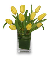 SUNNY TULIPS Floral Arrangement in Davis, CA | STRELITZIA FLOWER CO.