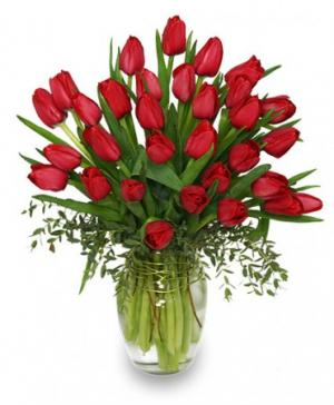 CHERRY RED TULIPS Bouquet in Amelia Island, FL | ISLAND FLOWER & GARDEN