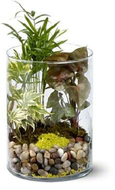 Garden in Glass Plants For Him in Burbank, CA | LA BELLA FLOWER & GIFT SHOP