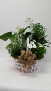 Green and Blooming Combo Basket Plants