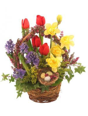 It's Finally Spring! Basket Arrangement in Denver, CO | ED MOORE FLORIST