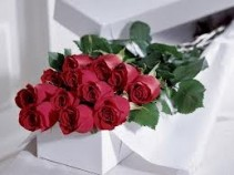 Long Stem Roses in Gift Box Boxed Roses