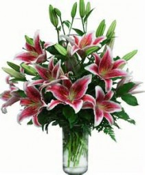 Lovely Lilly Bouquet Soft Pink Lilies