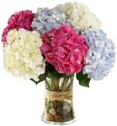 MIXED HYDRANGEA BOUQUET in Bethesda, MD | ARIEL FLORIST & GIFT BASKETS