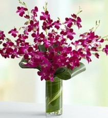 Orchid Embrace  7 Dendrobium Orchids with Tropical Foliage