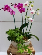 Orchid and ivy Garden