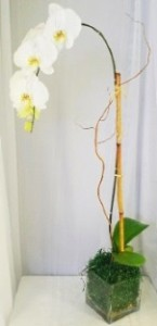 Orchid Plant includes the plant, cubed vase, moss, bamboo & cherry blossom wood