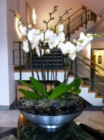 Orchids arranged
