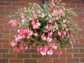 Outdoor Hanging Basket Shady