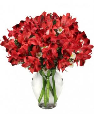 Passionate Peruvian Lily Bouquet in Canon City, CO |