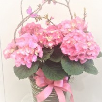 Pink Hydrangea Blooming Plant