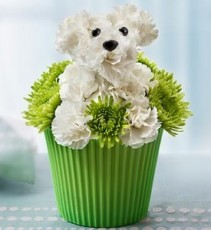 Pup-cake In Bloom a-DOG-able