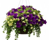 Purple Love Hanging Basket