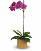 Purple Orchids Blooming Plant