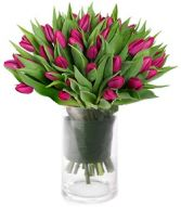 PURPLE TULIPS  ARRANGEMENT in Rockville, MD | ROCKVILLE FLORIST & GIFT BASKETS
