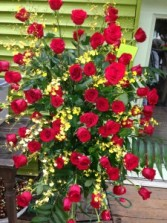 Red Roses with Yellow Oncidium Orchids Easel
