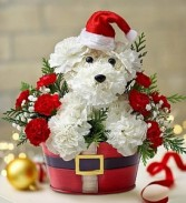 Santa Paws container