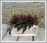 Sea Shore  Planter