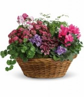 Simply Chic Plant Basket H971A