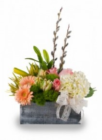 Spring Beauty Fresh spring flowers in wooden box