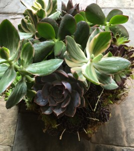 Succulents  in Wooden Box
