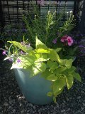Summer Breeze Planter in Laurel, MT | PLANTASIA FLOWERS, PLANTS & GIFTS