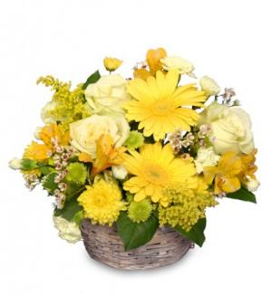 SUNNY FLOWER PATCH in a Basket in Edmonton, AB | POLLIE'S FLOWERS