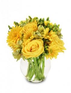 Sunshine Perfection Floral Arrangement in Athens, GA | FLOWERLAND