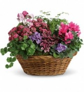 Teleflora's Simply Chic Mixed Plant Basket