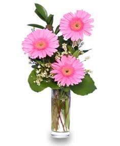 THANK YOU BLOOMS of Assorted Colored Gerberas