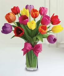 TRENDY TULIPS Rainbow of Tulips
