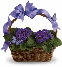 VIOLETS AND BUTTERFLIES T92-3A