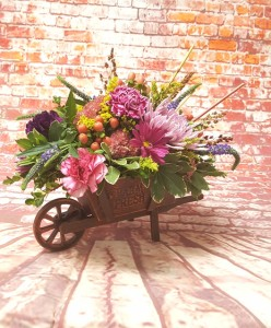 WAGON WHEEL  in Davis, CA | STRELITZIA FLOWER CO.