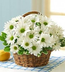White Daisy Basket Long Lasting Gift of Natural Beauty