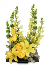YOLO Yellow Arrangement in Canton, Mississippi | HAMLIN'S FLORIST