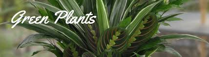 Shop for Sympathy Plants in Fort Worth TX
